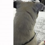 Commemorating Oliver, a Lett Architects Office Dog