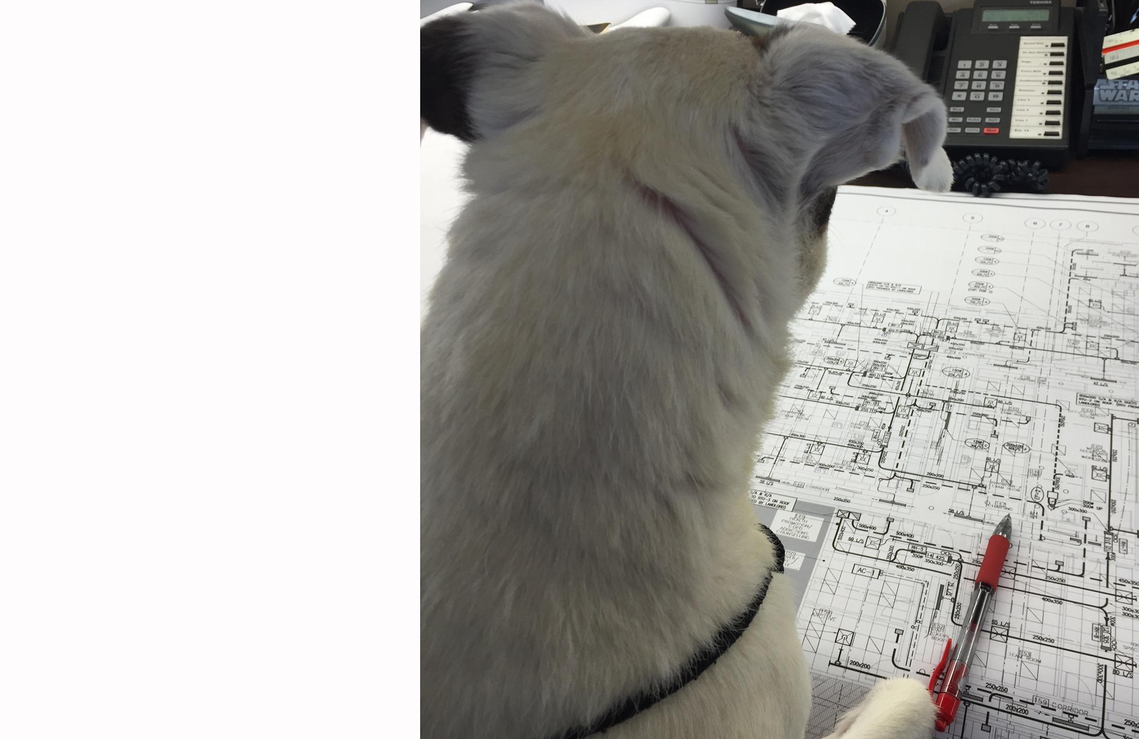 Oliver hard at work WF